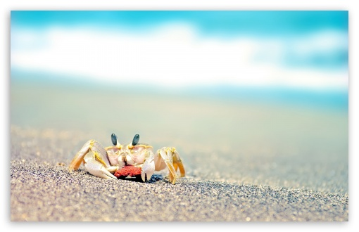Lonely Crab HD wallpaper for Wide 16:10 5:3 Widescreen WHXGA WQXGA WUXGA WXGA WGA ; HD 16:9 High Definition WQHD QWXGA 1080p 900p 720p QHD nHD ; Standard 4:3 5:4 3:2 Fullscreen UXGA XGA SVGA QSXGA SXGA DVGA HVGA HQVGA devices ( Apple PowerBook G4 iPhone 4 3G 3GS iPod Touch ) ; Tablet 1:1 ; iPad 1/2/Mini ; Mobile 4:3 5:3 3:2 16:9 5:4 - UXGA XGA SVGA WGA DVGA HVGA HQVGA devices ( Apple PowerBook G4 iPhone 4 3G 3GS iPod Touch ) WQHD QWXGA 1080p 900p 720p QHD nHD QSXGA SXGA ; Dual 16:10 5:3 16:9 4:3 5:4 WHXGA WQXGA WUXGA WXGA WGA WQHD QWXGA 1080p 900p 720p QHD nHD UXGA XGA SVGA QSXGA SXGA ;