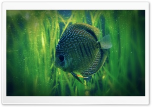 Lonely Fish HD Wide Wallpaper for Widescreen