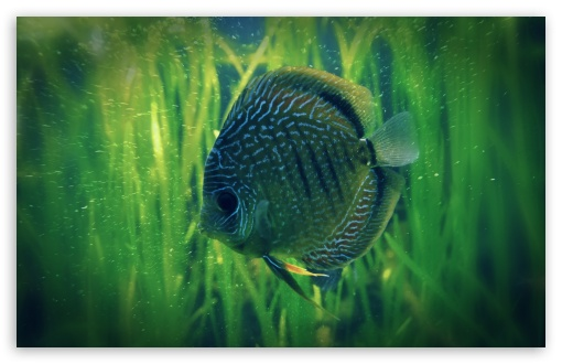 Lonely Fish HD wallpaper for Standard 4:3 5:4 Fullscreen UXGA XGA SVGA QSXGA SXGA ; Wide 16:10 5:3 Widescreen WHXGA WQXGA WUXGA WXGA WGA ; HD 16:9 High Definition WQHD QWXGA 1080p 900p 720p QHD nHD ; Other 3:2 DVGA HVGA HQVGA devices ( Apple PowerBook G4 iPhone 4 3G 3GS iPod Touch ) ; Mobile VGA WVGA iPhone iPad PSP Phone - VGA QVGA Smartphone ( PocketPC GPS iPod Zune BlackBerry HTC Samsung LG Nokia Eten Asus ) WVGA WQVGA Smartphone ( HTC Samsung Sony Ericsson LG Vertu MIO ) HVGA Smartphone ( Apple iPhone iPod BlackBerry HTC Samsung Nokia ) Sony PSP Zune HD Zen ; Tablet 2 Android ;