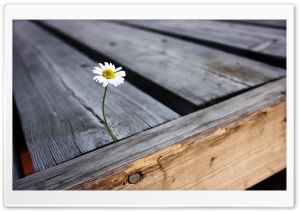 Lonely Flower HD Wide Wallpaper for Widescreen