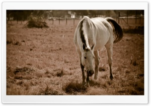 Lonely Horse HD Wide Wallpaper for Widescreen