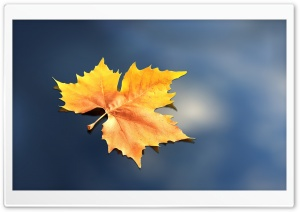 Lonely Leaf HD Wide Wallpaper for Widescreen