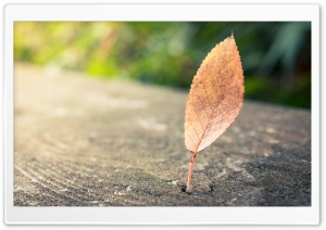 Lonely Leaf HD Wide Wallpaper for 4K UHD Widescreen desktop & smartphone