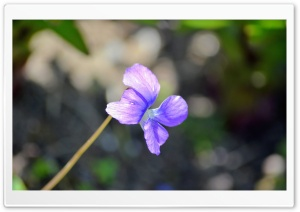 Lonely Purple Bloom Ultra HD Wallpaper for 4K UHD Widescreen desktop, tablet & smartphone
