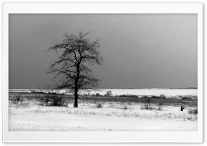 Lonely Tree HD Wide Wallpaper for Widescreen