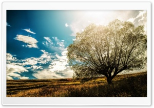 Lonely Tree In The Field HD Wide Wallpaper for 4K UHD Widescreen desktop & smartphone