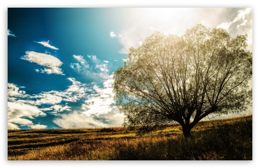 Lonely Tree In The Field HD wallpaper for Wide 16:10 5:3 Widescreen WHXGA WQXGA WUXGA WXGA WGA ; HD 16:9 High Definition WQHD QWXGA 1080p 900p 720p QHD nHD ; UHD 16:9 WQHD QWXGA 1080p 900p 720p QHD nHD ; Standard 4:3 5:4 3:2 Fullscreen UXGA XGA SVGA QSXGA SXGA DVGA HVGA HQVGA devices ( Apple PowerBook G4 iPhone 4 3G 3GS iPod Touch ) ; Tablet 1:1 ; iPad 1/2/Mini ; Mobile 4:3 5:3 3:2 16:9 5:4 - UXGA XGA SVGA WGA DVGA HVGA HQVGA devices ( Apple PowerBook G4 iPhone 4 3G 3GS iPod Touch ) WQHD QWXGA 1080p 900p 720p QHD nHD QSXGA SXGA ;