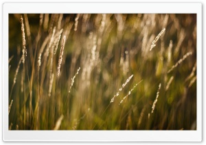 Long Grass Bokeh HD Wide Wallpaper for Widescreen