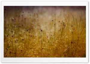 Long Grass, Summer HD Wide Wallpaper for Widescreen
