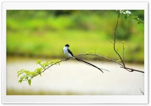 Long Tailed Bird Ultra HD Wallpaper for 4K UHD Widescreen desktop, tablet & smartphone