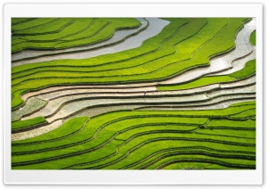 Look at All That Rice Ultra HD Wallpaper for 4K UHD Widescreen desktop, tablet & smartphone