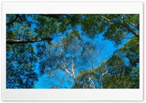 Look at the sky Ultra HD Wallpaper for 4K UHD Widescreen desktop, tablet & smartphone