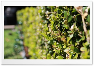 Looking Down The Hedge HD Wide Wallpaper for Widescreen
