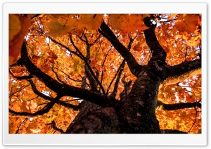 Looking up at Autumn Ultra HD Wallpaper for 4K UHD Widescreen desktop, tablet & smartphone