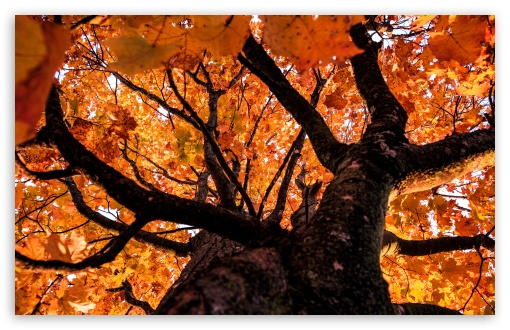 Looking up at Autumn UltraHD Wallpaper for Wide 16:10 5:3 Widescreen WHXGA WQXGA WUXGA WXGA WGA ; 8K UHD TV 16:9 Ultra High Definition 2160p 1440p 1080p 900p 720p ; UHD 16:9 2160p 1440p 1080p 900p 720p ; Standard 4:3 5:4 3:2 Fullscreen UXGA XGA SVGA QSXGA SXGA DVGA HVGA HQVGA ( Apple PowerBook G4 iPhone 4 3G 3GS iPod Touch ) ; Smartphone 16:9 3:2 5:3 2160p 1440p 1080p 900p 720p DVGA HVGA HQVGA ( Apple PowerBook G4 iPhone 4 3G 3GS iPod Touch ) WGA ; Tablet 1:1 ; iPad 1/2/Mini ; Mobile 4:3 5:3 3:2 16:9 5:4 - UXGA XGA SVGA WGA DVGA HVGA HQVGA ( Apple PowerBook G4 iPhone 4 3G 3GS iPod Touch ) 2160p 1440p 1080p 900p 720p QSXGA SXGA ;