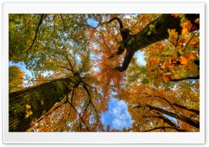 Looking up at the Autumn HD Wide Wallpaper for Widescreen