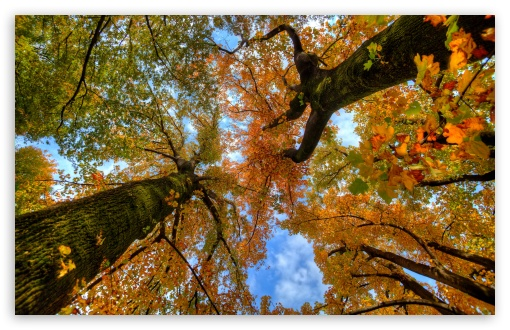 Looking up at the Autumn ❤ 4K UHD Wallpaper for Wide 16:10 5:3 Widescreen WHXGA WQXGA WUXGA WXGA WGA ; 4K UHD 16:9 Ultra High Definition 2160p 1440p 1080p 900p 720p ; UHD 16:9 2160p 1440p 1080p 900p 720p ; Standard 4:3 5:4 3:2 Fullscreen UXGA XGA SVGA QSXGA SXGA DVGA HVGA HQVGA ( Apple PowerBook G4 iPhone 4 3G 3GS iPod Touch ) ; Smartphone 5:3 WGA ; Tablet 1:1 ; iPad 1/2/Mini ; Mobile 4:3 5:3 3:2 16:9 5:4 - UXGA XGA SVGA WGA DVGA HVGA HQVGA ( Apple PowerBook G4 iPhone 4 3G 3GS iPod Touch ) 2160p 1440p 1080p 900p 720p QSXGA SXGA ;