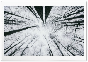 Looking Up at the Sky through Trees Ultra HD Wallpaper for 4K UHD Widescreen desktop, tablet & smartphone