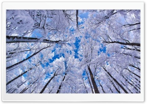 Looking Up Through Trees, Winter HD Wide Wallpaper for 4K UHD Widescreen desktop & smartphone