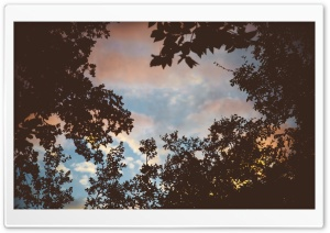Looking Up To See The Sky HD Wide Wallpaper for Widescreen