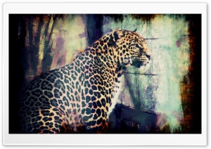 Lory Park Leopard HD Wide Wallpaper for Widescreen