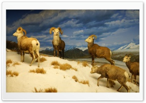 Los Angeles, Natural History Museum HD Wide Wallpaper for Widescreen
