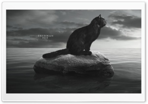 Lost Cat Ultra HD Wallpaper for 4K UHD Widescreen desktop, tablet & smartphone