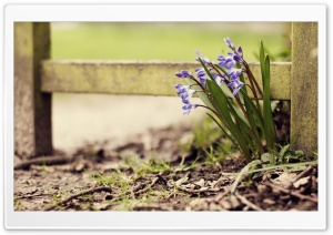Lost Hyacinths HD Wide Wallpaper for Widescreen