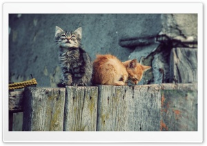Lost Kittens HD Wide Wallpaper for 4K UHD Widescreen desktop & smartphone