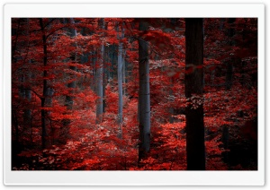 Love Forest HD Wide Wallpaper for Widescreen