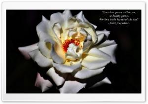 Love Grows Ultra HD Wallpaper for 4K UHD Widescreen desktop, tablet & smartphone