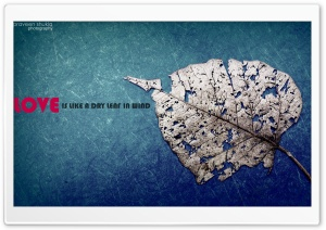Love Like Leaf HD Wide Wallpaper for 4K UHD Widescreen desktop & smartphone