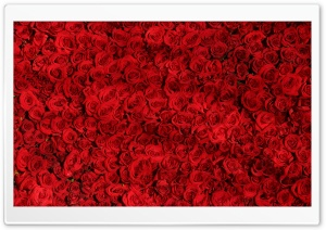 Love Red Roses Background HD Wide Wallpaper for 4K UHD Widescreen desktop & smartphone