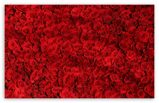 Love Red Roses Background ❤ 4K UHD Wallpaper for Wide 16:10 5:3 Widescreen WHXGA WQXGA WUXGA WXGA WGA ; 4K UHD 16:9 Ultra High Definition 2160p 1440p 1080p 900p 720p ; Standard 4:3 5:4 3:2 Fullscreen UXGA XGA SVGA QSXGA SXGA DVGA HVGA HQVGA ( Apple PowerBook G4 iPhone 4 3G 3GS iPod Touch ) ; Smartphone 5:3 WGA ; Tablet 1:1 ; iPad 1/2/Mini ; Mobile 4:3 5:3 3:2 16:9 5:4 - UXGA XGA SVGA WGA DVGA HVGA HQVGA ( Apple PowerBook G4 iPhone 4 3G 3GS iPod Touch ) 2160p 1440p 1080p 900p 720p QSXGA SXGA ; Dual 16:10 5:3 16:9 4:3 5:4 WHXGA WQXGA WUXGA WXGA WGA 2160p 1440p 1080p 900p 720p UXGA XGA SVGA QSXGA SXGA ;