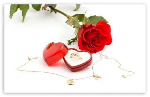 Download Love Rose HD Wallpaper