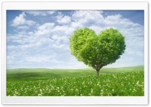 Love Tree HD Wide Wallpaper for Widescreen