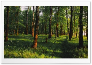 Lovely Forest HD Wide Wallpaper for Widescreen