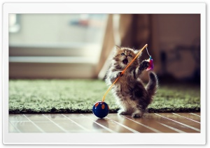Lovely Playful Kitten HD Wide Wallpaper for Widescreen