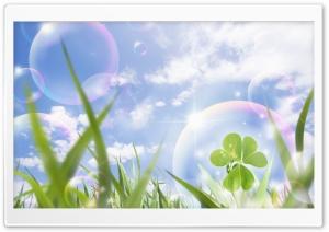 Lucky Clover Ultra HD Wallpaper for 4K UHD Widescreen desktop, tablet & smartphone