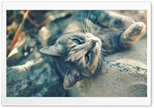 Lying Cat HD Wide Wallpaper for Widescreen