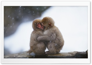 Macaques Hug HD Wide Wallpaper for Widescreen