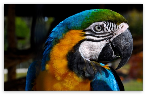 Macaw ❤ 4K UHD Wallpaper for Wide 16:10 5:3 Widescreen WHXGA WQXGA WUXGA WXGA WGA ; 4K UHD 16:9 Ultra High Definition 2160p 1440p 1080p 900p 720p ; Standard 4:3 5:4 3:2 Fullscreen UXGA XGA SVGA QSXGA SXGA DVGA HVGA HQVGA ( Apple PowerBook G4 iPhone 4 3G 3GS iPod Touch ) ; iPad 1/2/Mini ; Mobile 4:3 5:3 3:2 16:9 5:4 - UXGA XGA SVGA WGA DVGA HVGA HQVGA ( Apple PowerBook G4 iPhone 4 3G 3GS iPod Touch ) 2160p 1440p 1080p 900p 720p QSXGA SXGA ;