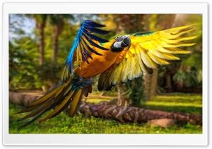 Macaw 1 Ultra HD Wallpaper for 4K UHD Widescreen desktop, tablet & smartphone