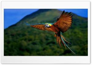 Macaw Ultra HD Wallpaper for 4K UHD Widescreen desktop, tablet & smartphone
