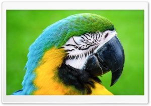 Macaw Parrot HD Wide Wallpaper for Widescreen