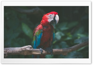 Macaw Parrot Bird HD Wide Wallpaper for Widescreen