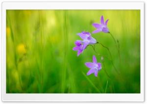 Macro Ultra HD Wallpaper for 4K UHD Widescreen desktop, tablet & smartphone