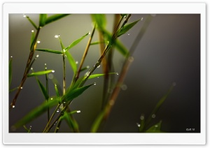 Macro HD Wide Wallpaper for Widescreen