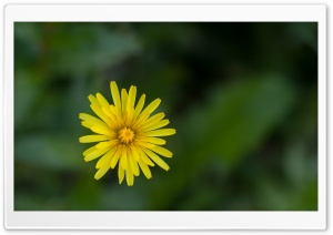 Macro Dandelion HD Wide Wallpaper for Widescreen