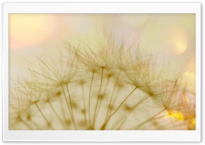 Macro Dandelion Fluff HD Wide Wallpaper for Widescreen